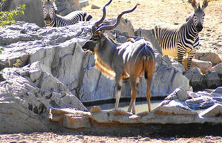 Hobatere Lodge - Wild Life