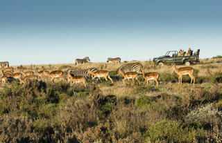 Antelope at Gondwana