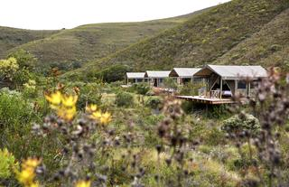 Tented Eco Camp Experience