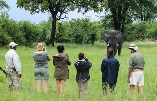 Fantastic walking safaris