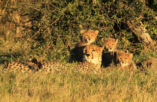 Queenie and her cubs