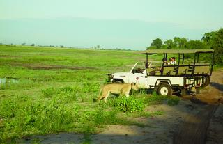 Chobe Bush Lodge game drive